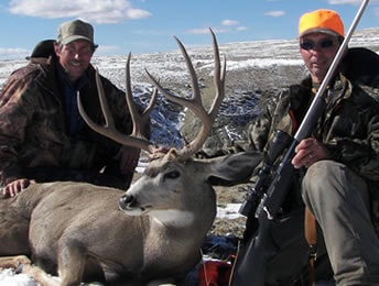 beautiful wyoming mule deer