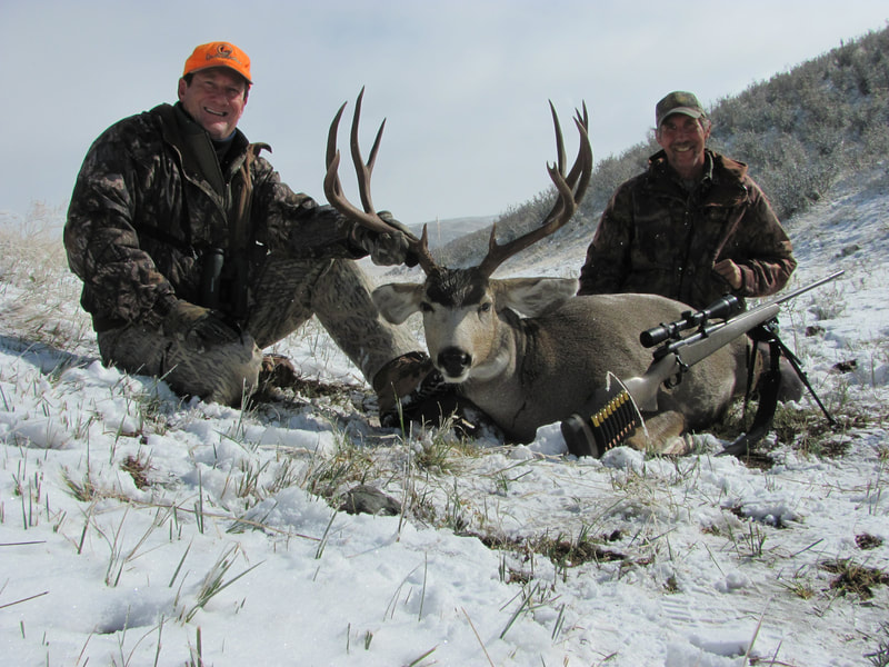 mule deer buck wyoming